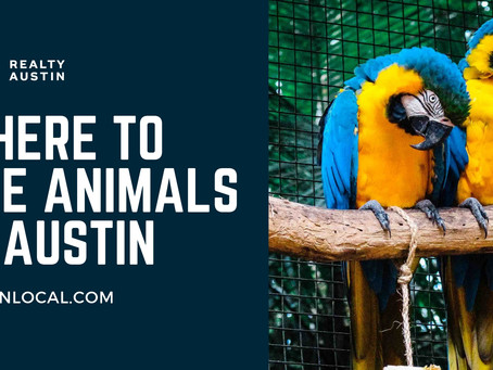 Where to See Animals in Austin