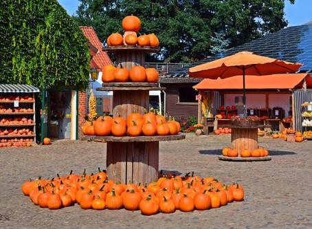 Top 15 Pumpkin Patches in the U.S.