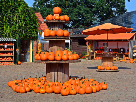 Top 15 Pumpkin Patches in the U.S.