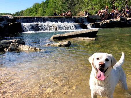 How to Access Barton Creek Greenbelt in Austin