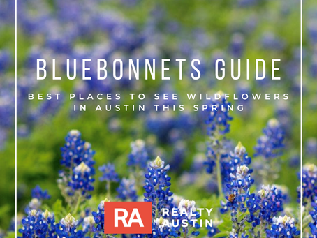 Best Places to See Bluebonnets This Spring