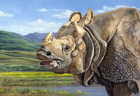 Reduced Size_Rhino.jpg