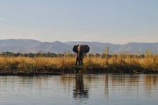 Wildlife Conservation Impact Photography