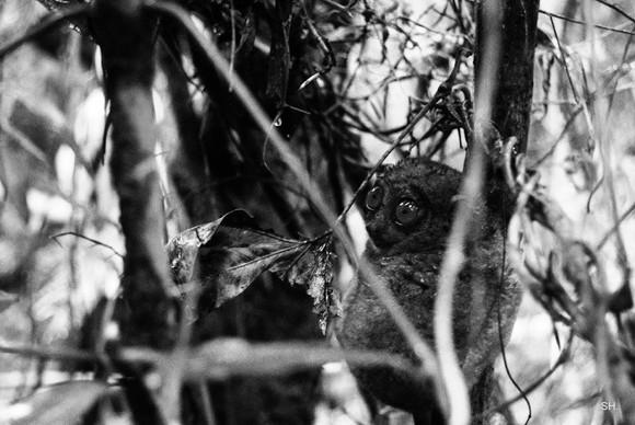 Impact Photography biodiversity