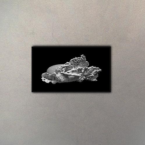 Fósil Coral I