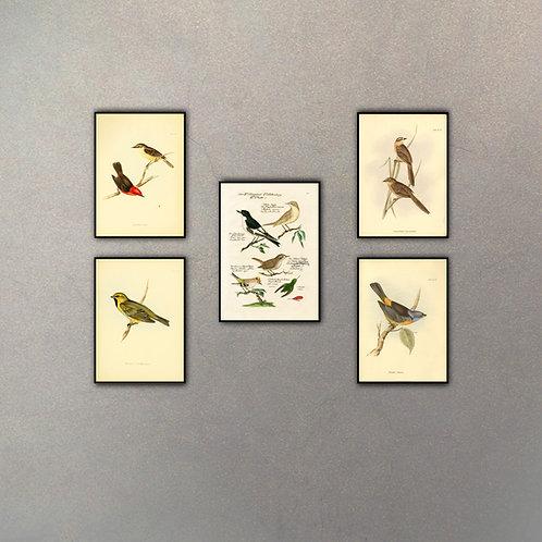 Set Aves (5 cuadros)