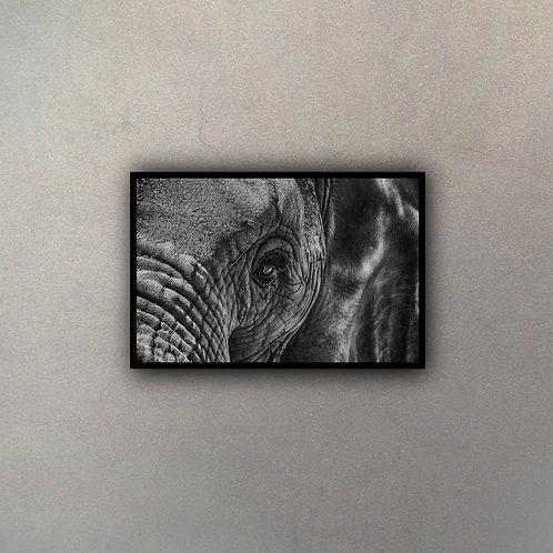 Ojo Elefante I