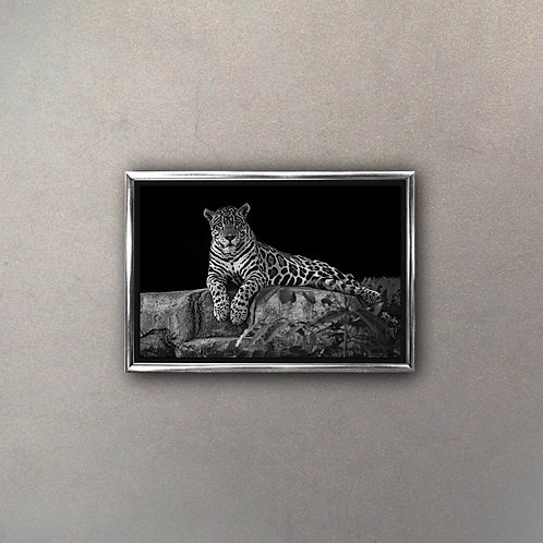 Leopardo I (Canvas)