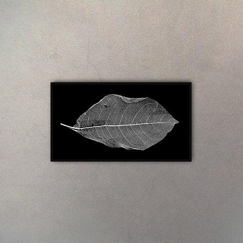 Fotografía Hoja Blanco y Negro