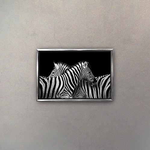 Cebras I (Canvas)