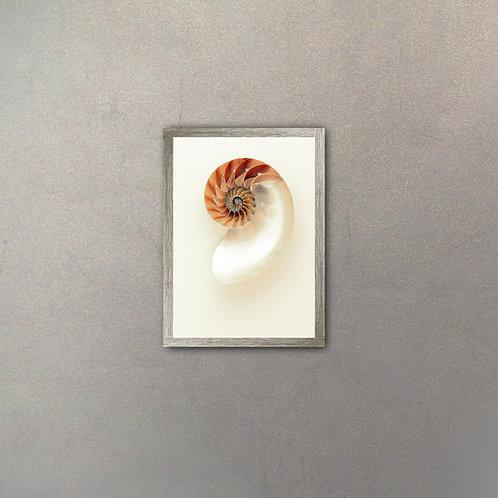 Caracol Nautilus I