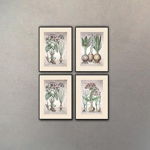 Set Botánica II (4 Cuadros)