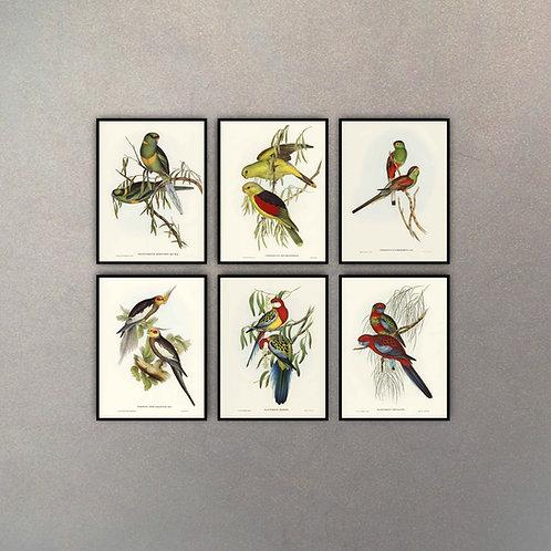 Set Aves II (6 Cuadros)