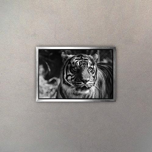 Tigre I (Canvas)