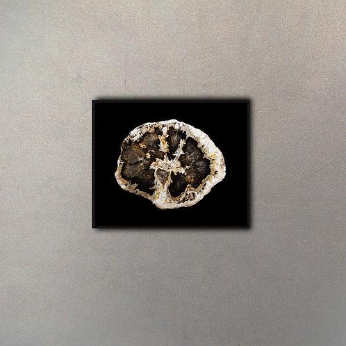 Madera Petrificada II