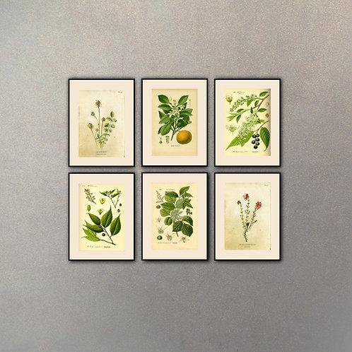 Set Botánica I (6 Cuadros)