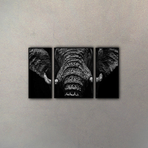 Set Elefante (3 Cuadros)