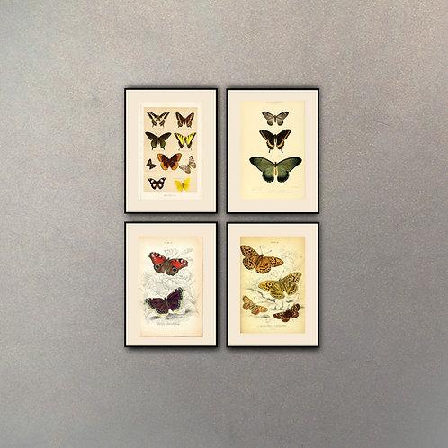 Set Mariposas (4 cuadros)