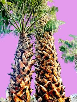 Sister Palms