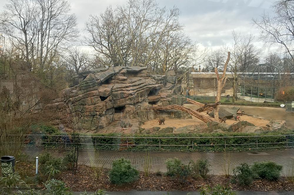 BIKINI BERLINから見える動物園の猿山