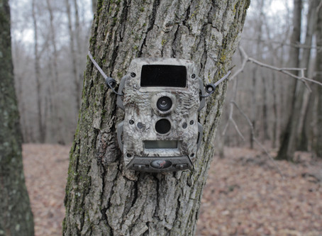 Tips for Summer Trail Camera Deployment