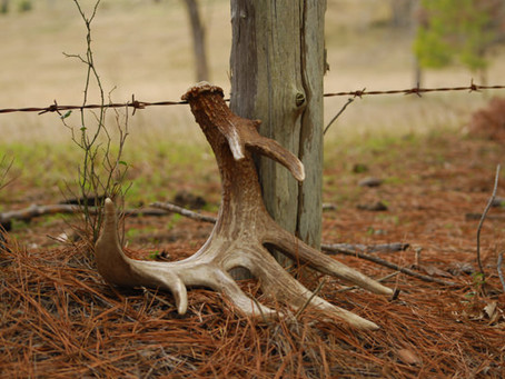 When Should You Start Shed Hunting?