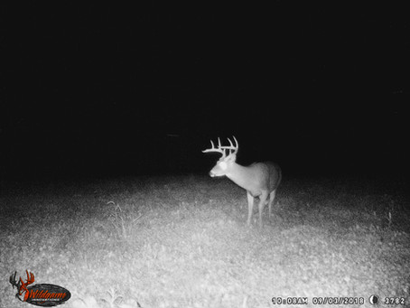 Picking Up on Subtle Changes in September Whitetails