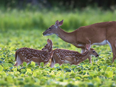 June is a Critical Month for Wildlife