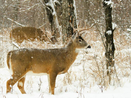 Finding Success in January | Deer Hunting