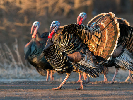 Dreaming of a Spring Turkey Tour