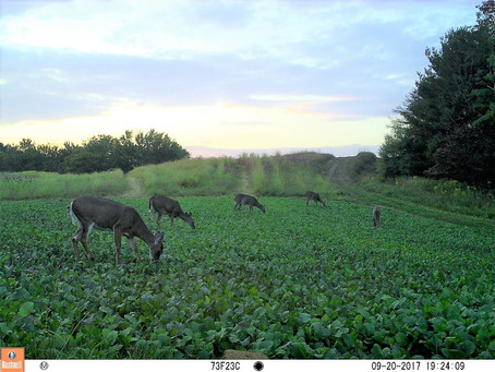 A Late-Summer Deer Hunting Checklist