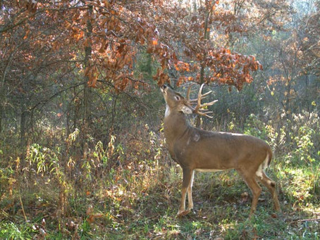 Rut Realities | Deer Hunting