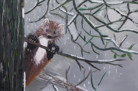 3) Pine Marten by Keri - A6