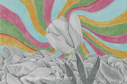 Bright Tulip