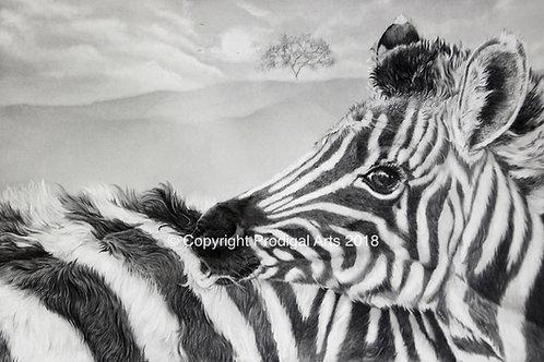 Zebra Foal, Print