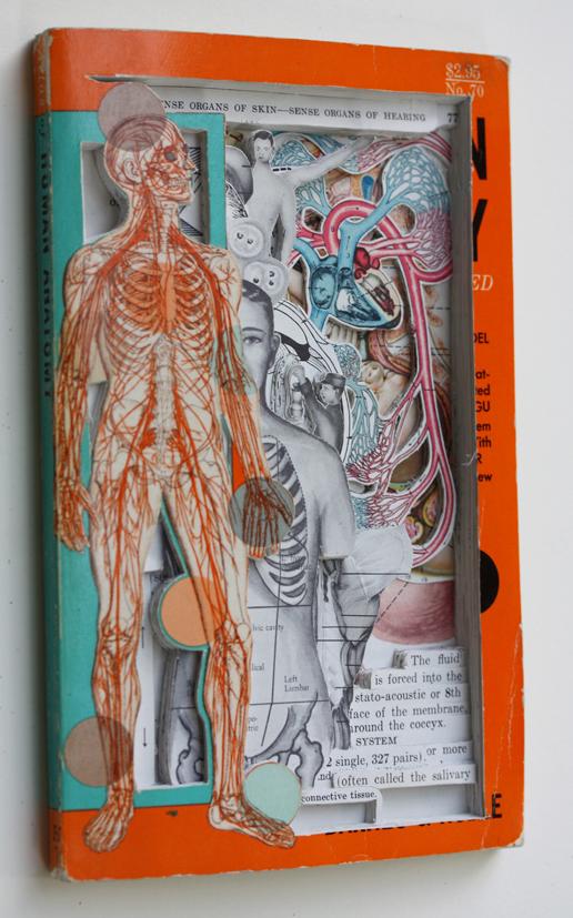 Human Anatomy (2013)