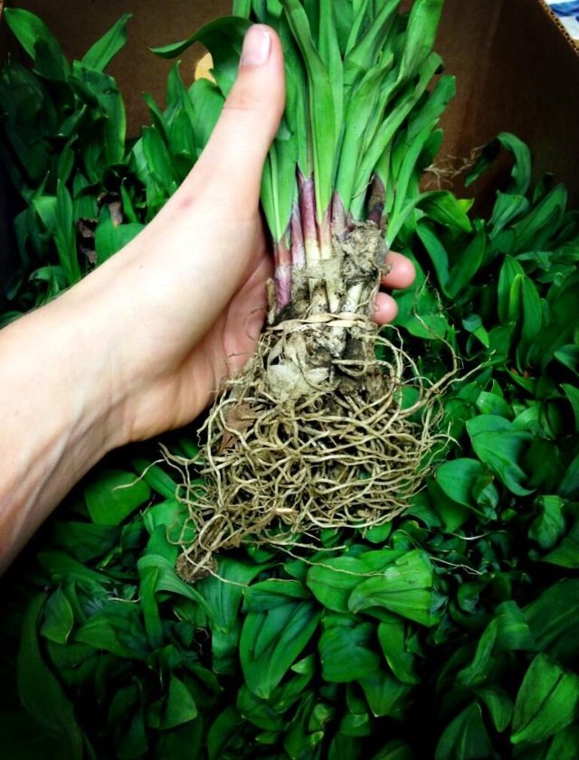 South Carolina Ramps
