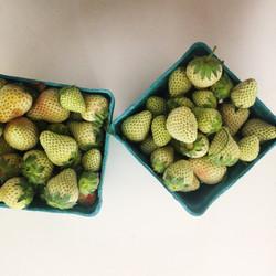 Portland Green Strawberries