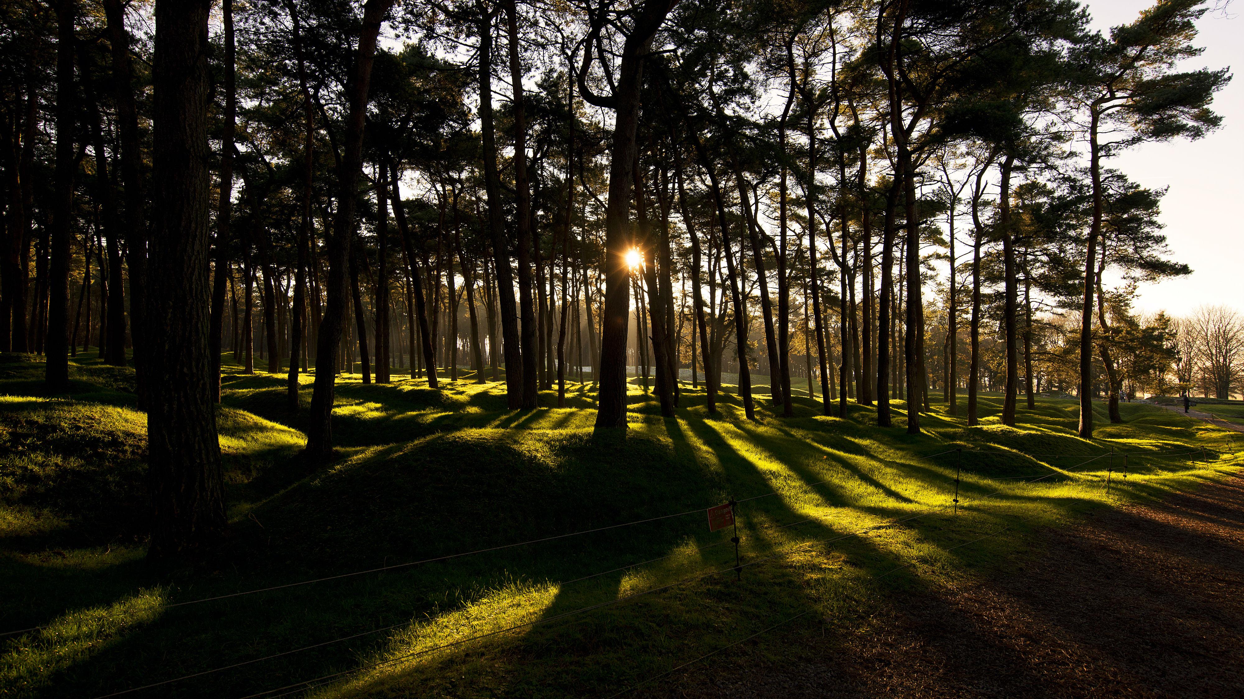 Vimy Ridge Trees