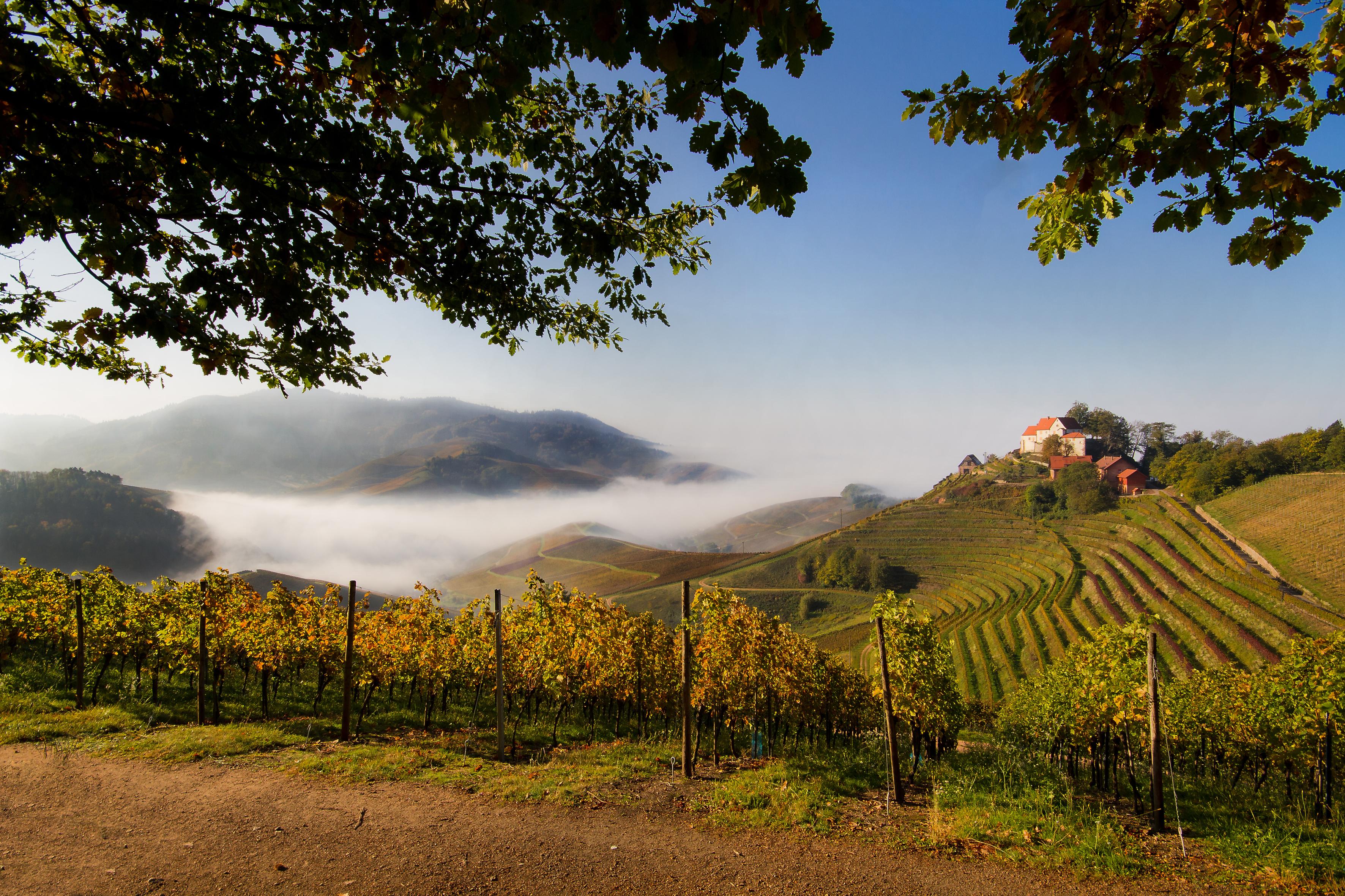 Durbach mit Schloss und Nebel