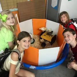 Baby Chicks in 3rd grade 2019