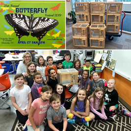 Butterfly life cycle cages 2019