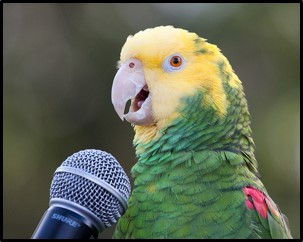 Pretty Bird! But Parroting is Not Pretty in Proposals! #2 Proposal Development Lesson Learned