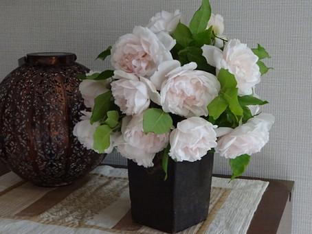 Bouquet de roses Mme Alfred Carrière