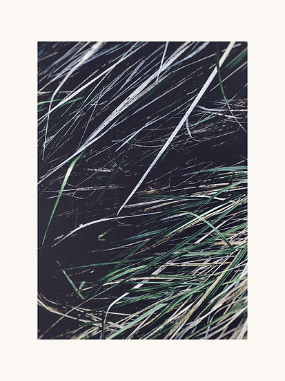 Print large 40 x 30 cm Nature one