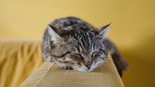 Seis benefícios de uma boa noite de sono