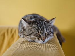 I want to sleep!