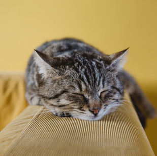 [RECORDING] Improving sleep quality – 14 mins