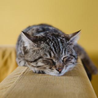 Gatinho do sono