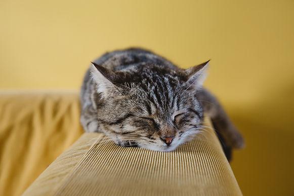 打ち合わせで眠る猫